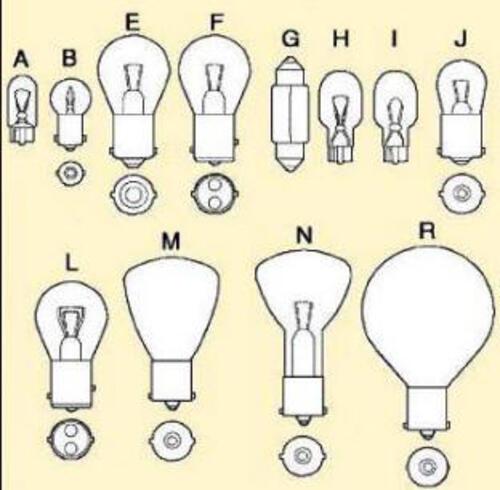 #1003 Bulbs 2/Card
