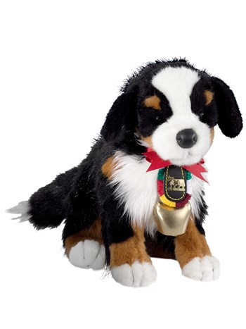 bernese ben with bell