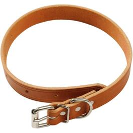 "20"" x 1"" Plain Dog Collar thumb"