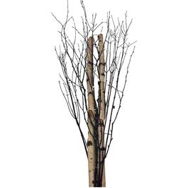 3 Piece 4' Birch/Dogwood Branches Bundle thumb