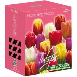 Paquet de 45 bulbes de tulipes Triumph, assortis thumb