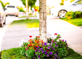 Here's How to plant flowers at the base of a tree.